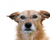 Senior+Dog